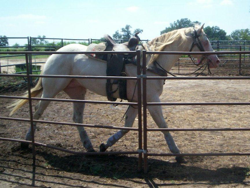 cowgirlsok